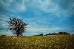 One tree without leaves on a spring farm field against a blue cloudy sky. Spring landscape. one tree without leaves on an agricultural field on a background of a Stock Photography