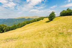 One tree on the meadow in high mountain landscape. Beech forest around the hill. ridge in the distance. sunny afternoon weather in summer. location in the royalty free stock photography