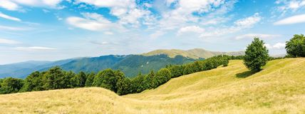 One tree on the meadow in high mountain panorama. Beech forest around the hill. ridge in the distance. sunny afternoon weather in summer. location in the stock photos