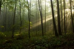 The one tree. Morning sunlight on a tree stock photography