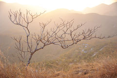 One tree and mountain. Background Stock Image