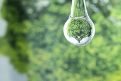One tree reflection in water drop Royalty Free Stock Photos