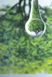 One tree reflection in water drop Royalty Free Stock Image