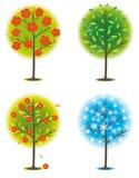 One tree in seasons Royalty Free Stock Image
