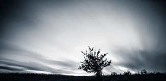 One tree and sky. Long exposure stock photo