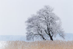One tree on the snow-covered lake Royalty Free Stock Photo