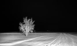 One tree in the snow Royalty Free Stock Image