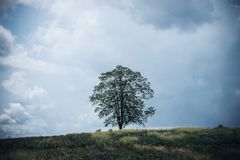 Only one tree stand among nature Royalty Free Stock Image