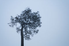 One tree standing out in a morning of foggy winter Stock Photography
