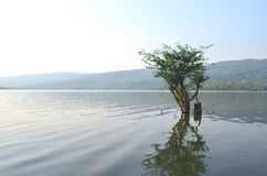 One tree stands alone in a swamp. Royalty Free Stock Image