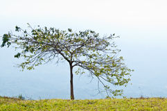 One tree on top of mountain Royalty Free Stock Photo