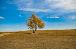 One tree under the blue sky Stock Images