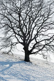 One Tree in Winter Royalty Free Stock Image
