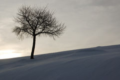 One tree on winter background Stock Images
