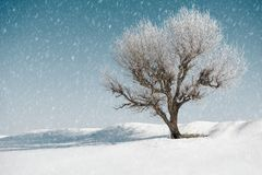 One tree in winter, blue sky with snow on background, beautiful wild landscape, nature concept royalty free stock photography