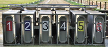 One two three – go. Starting cases of a sight hound racecourse stock images