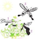 One-two-three, mariposa Foto de archivo libre de regalías