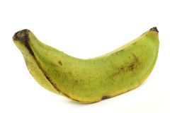 One unripe baking banana (plantain banana) stock photography