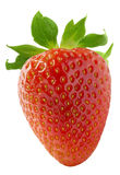 One vertical strawberry  on white background Royalty Free Stock Photo