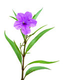 One violet flower isolated on white Stock Photo