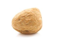 One walnut Royalty Free Stock Photography