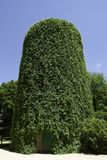 One water tower. S covered with green leaves Stock Photography