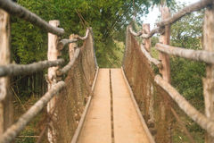 One way. Nature in Brazil - wildlife to discover Stock Images
