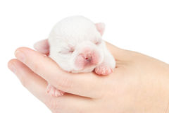One week old puppy Stock Photos