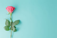 One wet red rose isolated on a aquamarine background Stock Image