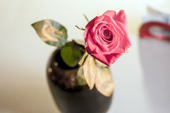 One wet red rose in vase in blurred white background. Selective focus lens effects. One wet red rose in vase in blurred white background. Selective focus lens Stock Photo