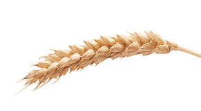 One wheat spikelet on the white Stock Photos