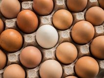One white egg among brown in the tray. One whione white egg among brown in the tray Royalty Free Stock Image