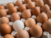 One white egg among brown in the tray. One whione white egg among brown in the tray Stock Photo