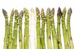 One White Asparagus Spear Among Twelve Green Ones. One single white asparagus spear amidst a line-up of twelve green asparagus stems. Each asparagus is aligned Stock Images