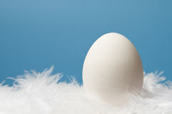 One white egg with blue background. One white egg laying on white feathers with blue background Stock Photography
