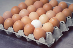 One white egg in box horizontal. One white egg in the box horizontal Royalty Free Stock Photo