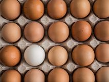 One white egg among brown in the tray. One whione white egg among brown in the tray Royalty Free Stock Photos