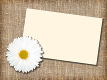 One white flower with message-card Stock Photo