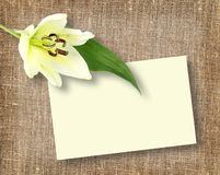 One white flower with message-card Stock Photography