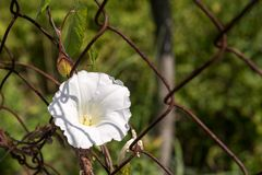 One white flower on the metal gauze Royalty Free Stock Photos