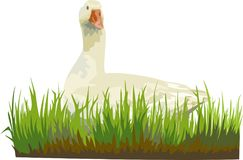 Goose sitting in the grass vector illustration. One white goose sitting in the grass vector illustration, multicolor, white background Royalty Free Stock Image
