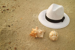 One White hat and two types of cute natural sea shells on the sandy beach Royalty Free Stock Image