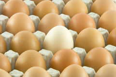 One white and many ordinary eggs. One white and many ordinary fresh rural eggs packed into cardboard container isolated over white background Royalty Free Stock Photo