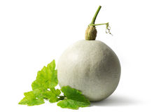 One White Pumpkin with Green Leaves Isolated on White Royalty Free Stock Image