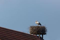 One white stork Ciconia ciconia in nest on roof Stock Photos