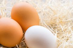 One white and two brown eggs on the background of hay. royalty free stock photo