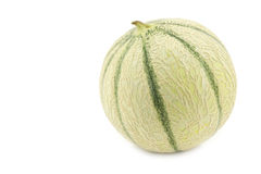 One whole cantaloupe melon Stock Image