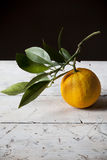 One whole and fresh orange freshly harvested with branch with leaves Royalty Free Stock Photo