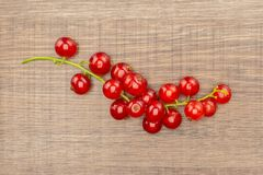 Fresh raw red currant berry on brown wood. One whole red currant berry string flatlay on brown wood stock images
