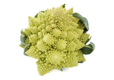 One whole Romanesco broccoli Royalty Free Stock Photography